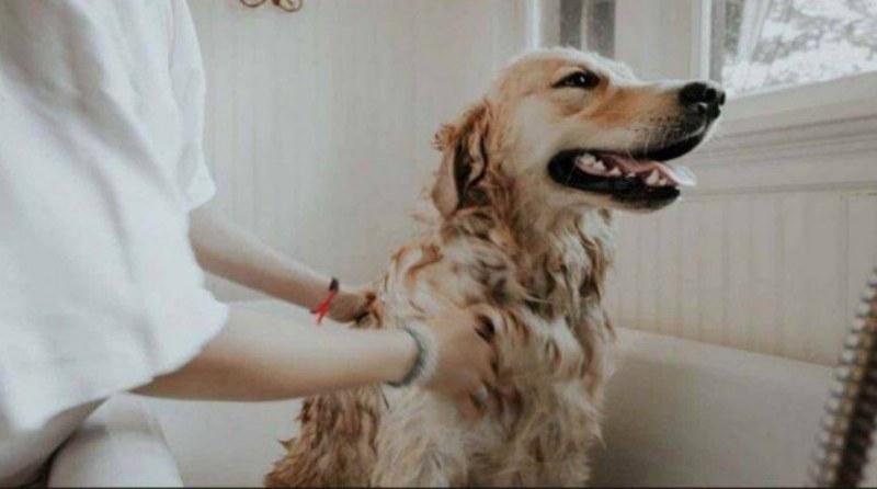 come-curare-rogna-cane-modo-naturale
