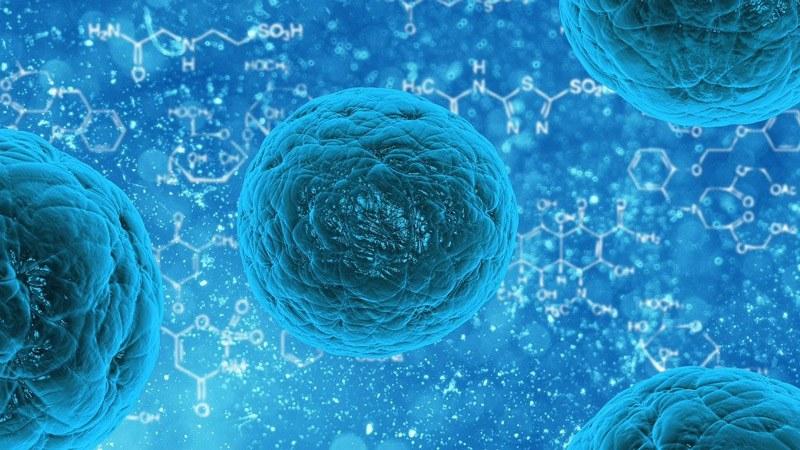 batteri-bactoblis_